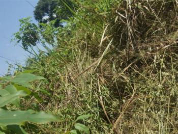 10 Acres Land, Nakawuka Jungo, Wakiso, Central Region, Land for Sale